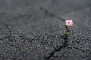 Remembered for your resiliency image